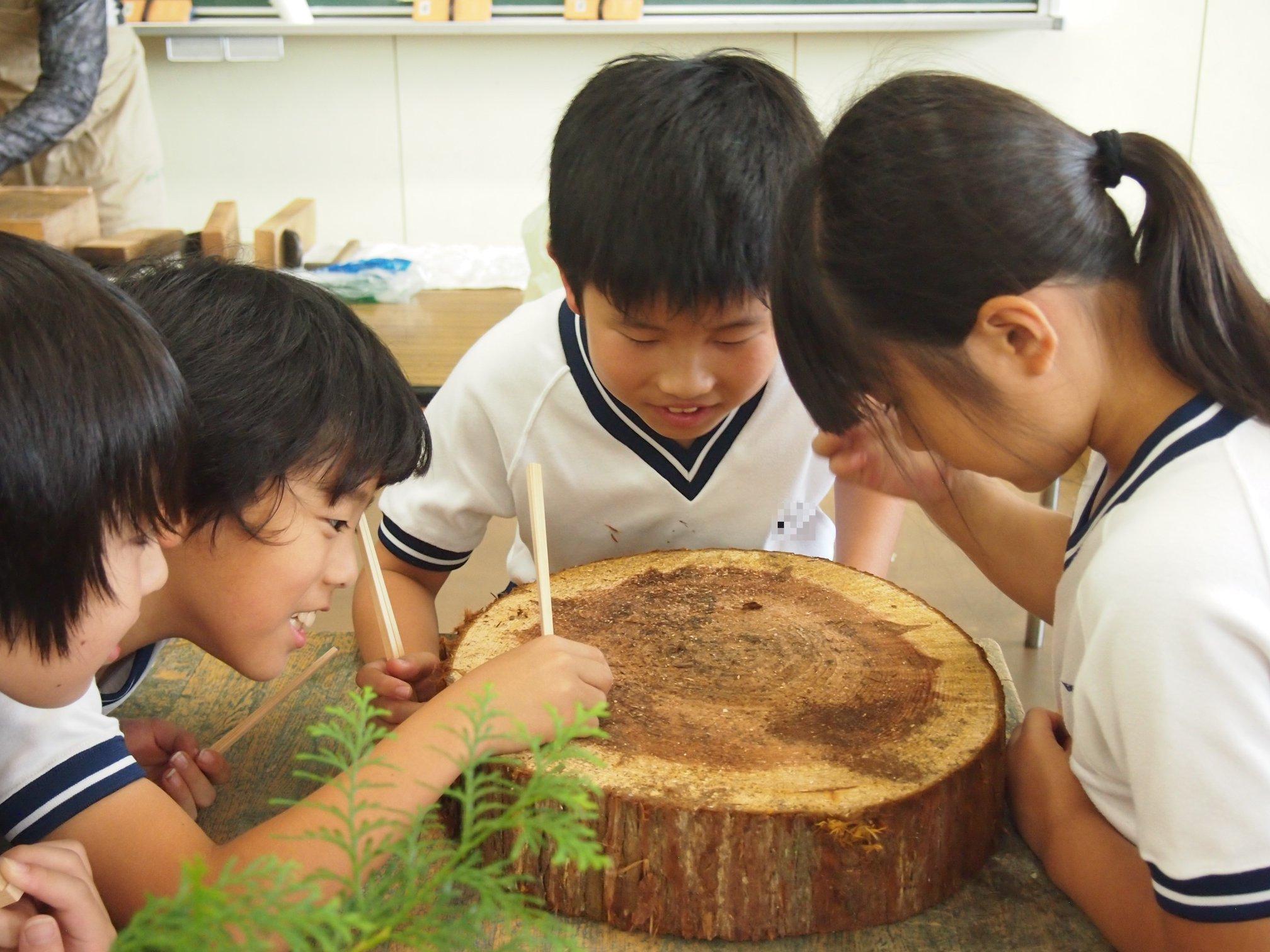 木育・環境教育 Education
