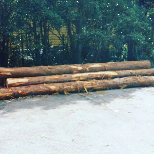 認証木粉ができるまで①端材などの材料から製造されることの多い木粉原木から加工することにより、出所のしっかりした認証木粉を製造することもできます。(那賀ウッドは、SGEC CoC認証の木粉を供給できる唯一の工場なのです🙂) 写真のような、等級の低い地域材がどのように加工されるのか、シリーズでご紹介させていただきます。よろしくお願いします🌲#木粉 #woodpowder #杉 #国産 #地域材 #tokushima #nakawood