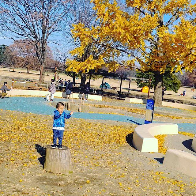 切り株おいとくだけで立派な遊具に!のぼると何やら嬉しいみたいですまだまだ紅葉が残っているところもありますが、いよいよ冬を迎えますね~#木育 #切り株 #タンコロ